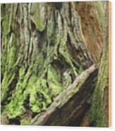 Redwood Trees Art Prints Baslee Troutman Wood Print