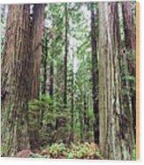 Redwood5 Wood Print