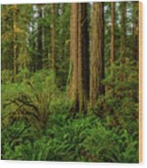 Redwoods And Ferns Wood Print