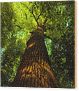 Redwoods Wood Print