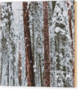 Redwoods In Snow Wood Print