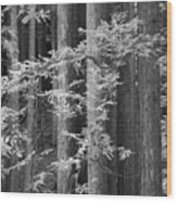 Redwoods Ir 0625 Wood Print