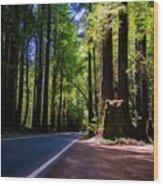 Redwoods Road Wood Print