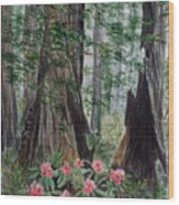 Redwoods Wood Print