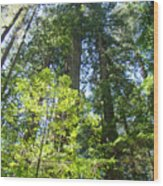 Redwoods Trees Forest Art Prints Baslee Troutman Wood Print