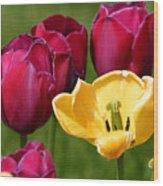 Redyellowtulips6722 Wood Print