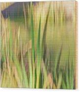 Reed Abstract II Wood Print
