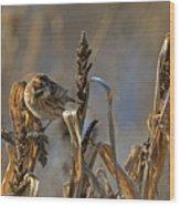 Reed Bunting Wood Print