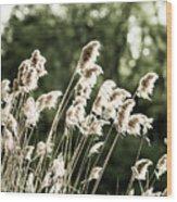 Reed  Wood Print