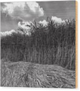 Reeds And Clouds Wood Print