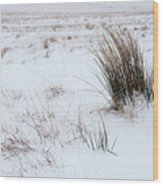 Reeds And Snow Wood Print