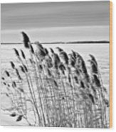 Reeds On A Frozen Lake Wood Print