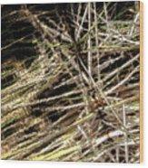 Reeds Reflected Wood Print