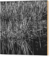 Reeds Reflection  Wood Print