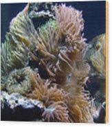 Reef-3 Wood Print
