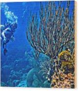 Reef Dive Wood Print