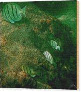 Reef Life Off Hawaii Wood Print