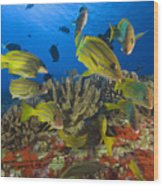 Reef Scene Wood Print by Dave Fleetham - Printscapes
