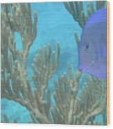 Reef Tang Wood Print
