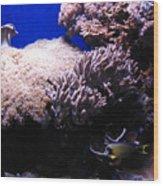 Reef Tank Wood Print