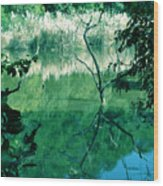 Reflected Branches Wood Print