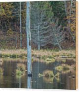 Reflected Tree Wood Print
