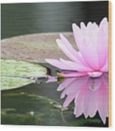 Reflected Water Lily Wood Print