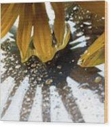 Reflected Yellow Petals Wood Print