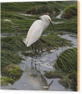 Reflecting At The Tide Pool Wood Print