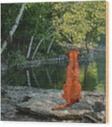 Reflecting Wood Print