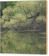 Reflecting Spring Green Wood Print
