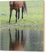 Reflecting Horse Near Water Wood Print