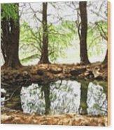Reflecting Tree Trunks Wood Print
