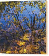 Reflection And Transparency Wood Print