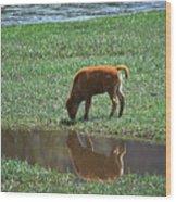 Reflection Buffalo Calf Wood Print