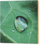 Reflection In A Dew Drop Wood Print