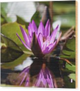 Reflection In Fuchsia Wood Print