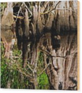 Reflection Of Cypress Knees Wood Print