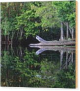 Reflection Off The Withlacoochee River Wood Print