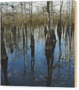 Reflections At Big Cypress Wood Print