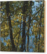 Reflections Fall Wood Print