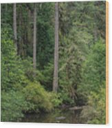 Reflections In Silver Falls State Park Wood Print