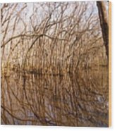 Reflections In The Swamp Wood Print