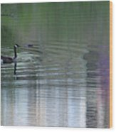 Reflections Of A Canada Goose Wood Print