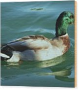 Reflections From A Mallard In Omaha Wood Print