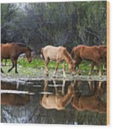 Reflections Of Wild Horses In The Salt River Wood Print
