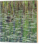 Reflections On Duck Pond Wood Print