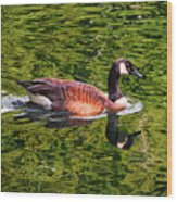 Reflections - Swimming Goose 003 Wood Print