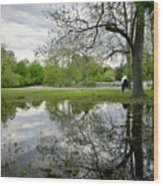 Reflective Field In Spring Wood Print