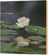 Reflective Lilly Wood Print